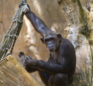 Zoo de Barcelona - Tierpark in Spanien